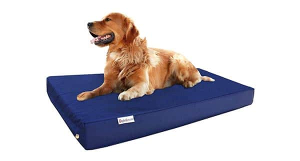 dog lying on bed with durable cover
