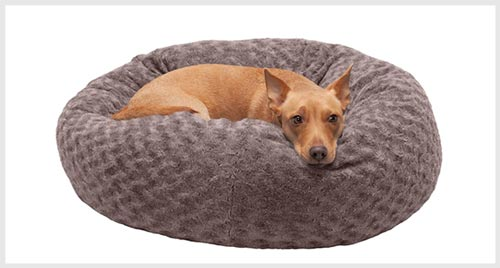 pregnant dog nesting on a bed
