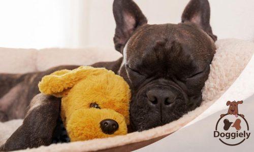 7 Best Dog Bed under $100