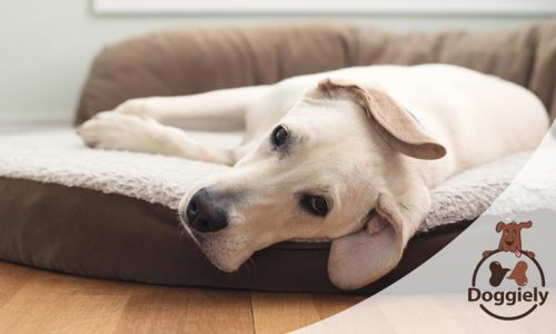 How to Clean Dog Bed Foam