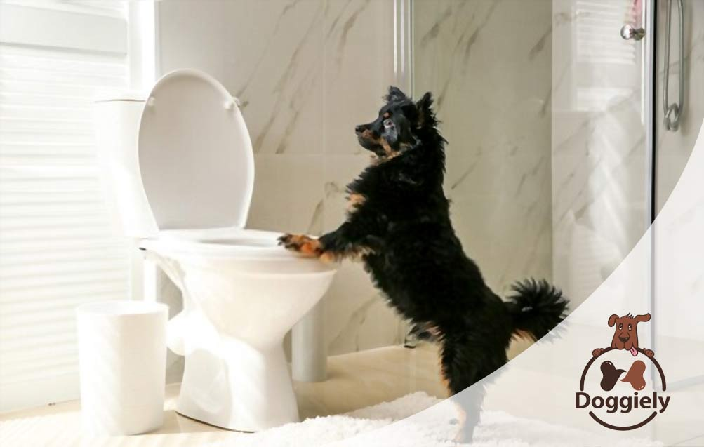 How To Potty Train A Dog In An Apartment