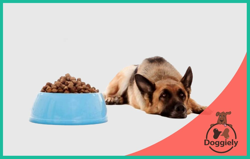 How To Train A Dog That Doesn't Like Treats