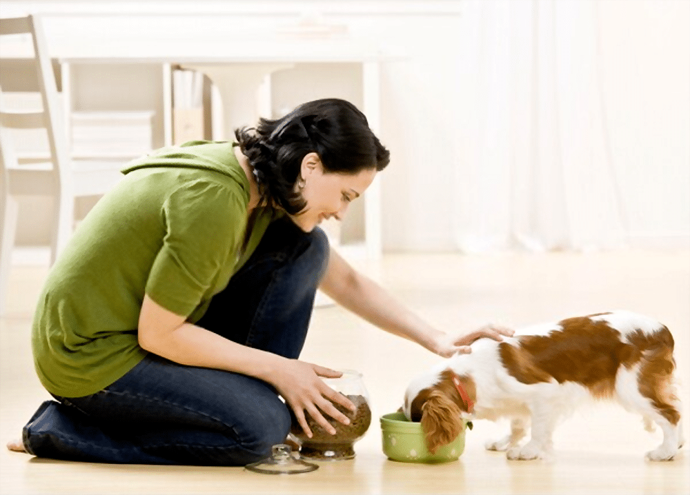 How_much_to_feed_a_small_dog