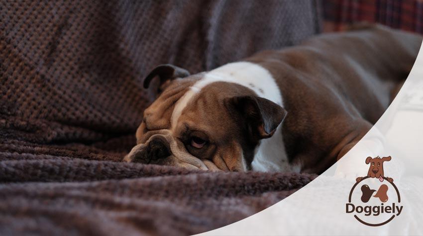 Best Chew Proof Dog Blankets
