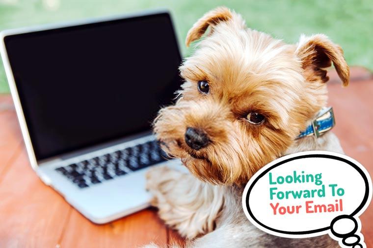 contact us Doggiely.com