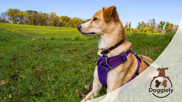 Top chew proof dog harnesses