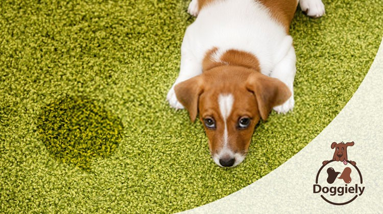 How to Potty Train an Older Dog in an Apartment?