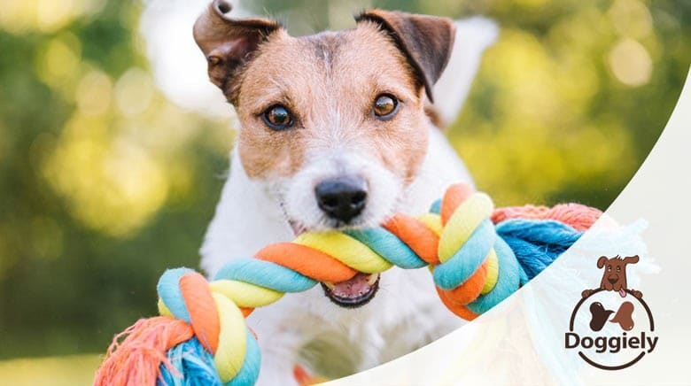 why do dogs shove toys in your face?