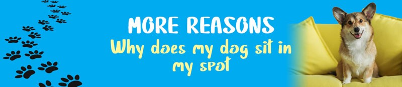 reasons why my dog sit in my spot