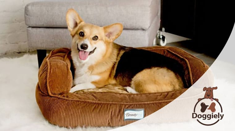 Best Bolster Dog Beds with raised edges