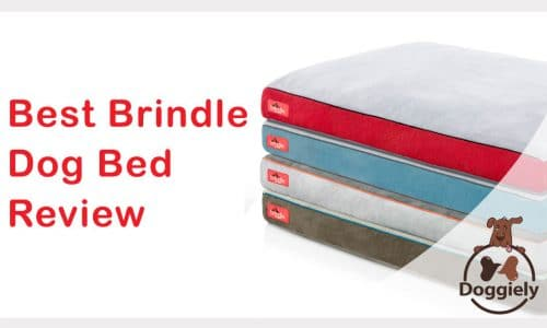 Best Brindle dog bed review