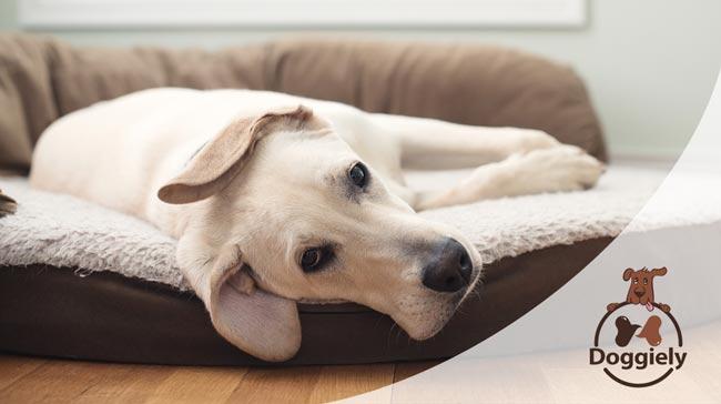 8 Best Dog Beds Under $50