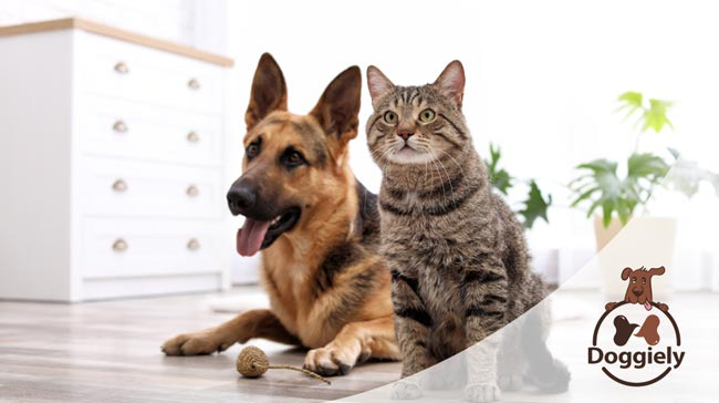 Can Dogs Get Sick From Eating Cat Poop