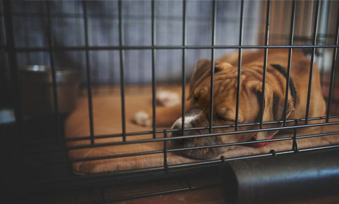 Cons or disadvantages of Crate Training
