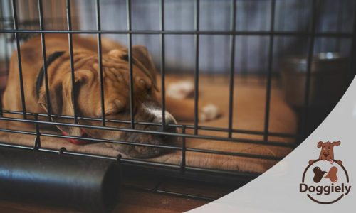 How To Keep A Dog Busy In A Crate