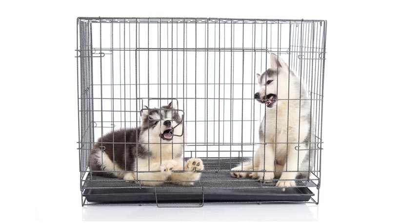dog companion to get entertained in a crate