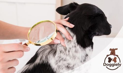 Best Lice Shampoo For Dogs