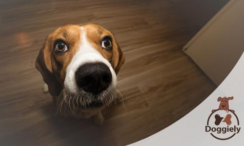 Can Dogs Eat Vinegar Chips (and Salt): What You Should Know