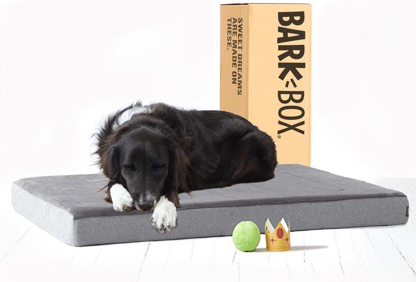 Bark Orthopedic Memory Foam