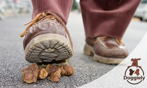 How to Get Dog Poop Off Shoes