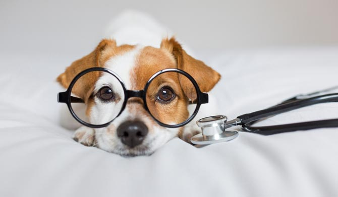 dog dressed as a doctor to detect illness