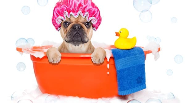 dog in pet tub about to be washed